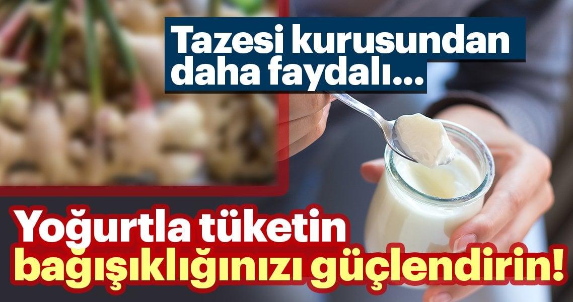 Tazesi kurusundan daha yararlı… Yoğurtla harcayın bağışıklığınızı kuvvetlendirin!