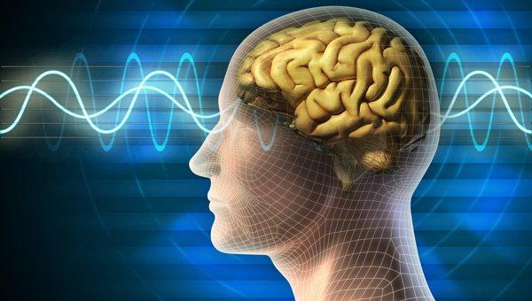 Beyin ihtiyarlamasını önleyen yiyecekler afallatıyor! İşte belleği genç yakalayan süper yiyecekler ve verimleri…