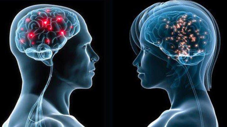Erkek Beyni İle Kadın Beyni Arasındaki Fark