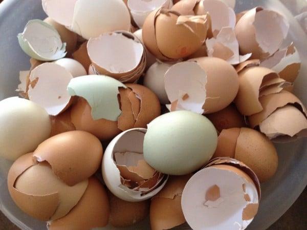 Yumurta alırken dikkat! Kabuğu böyleyse…