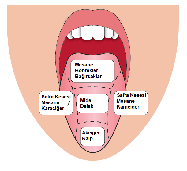 Diliniz Vücudunuzdaki Toksinler Hakkında Ne Diyor ?
