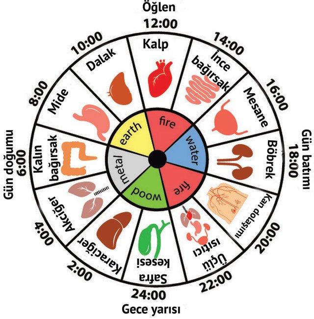 Organlarımızın Hangi Saatlerde Çalışıp Çalışmadığını Öğrenmek İçin İşte Çin Saati