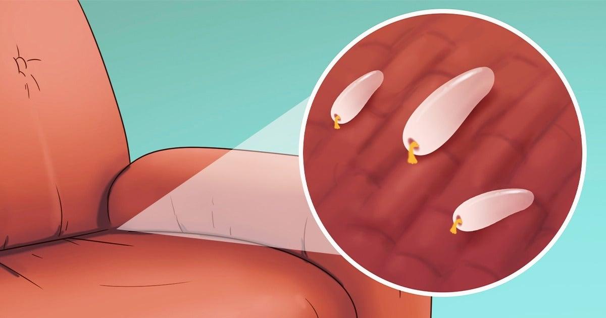 Evinizde Yatak Böcekleri Olduğunu Gösteren 5 İşaret